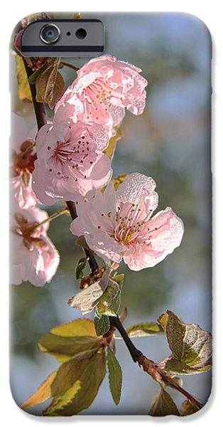 Plum iPhone Cases - Ornamental Plum Tree Pink Flower Blossoms iPhone Case by Jennie Marie Schell