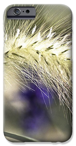 Ornamental Sweet Grass iPhone Case by Heiko Koehrer-Wagner