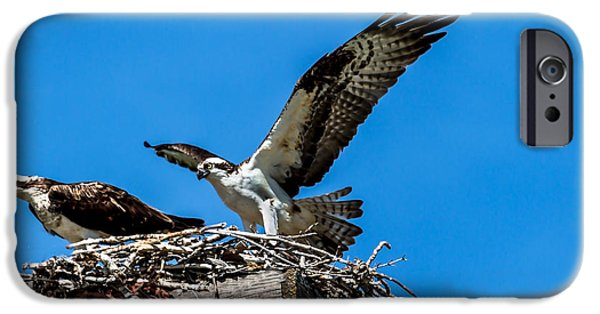 Sea Platform iPhone Cases - Osprey Arriving Home iPhone Case by Robert Bales