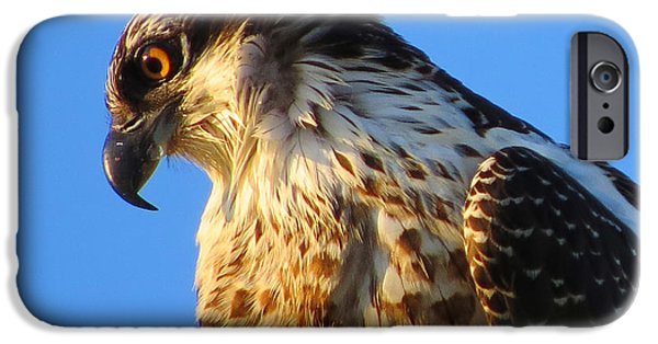 Harbor Sesuit Harbor iPhone Cases - Osprey - Eager Youth iPhone Case by Dianne Cowen