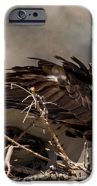 Osprey Family Huddle iPhone Case by John Daly