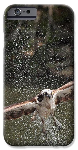 Osprey Fishing the Nequasset River iPhone Case by Allen Ponziani