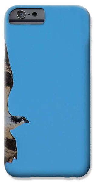 Osprey flying Home With Dinner iPhone Case by Robert Bales
