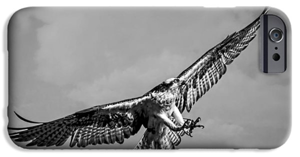 Killer B iPhone Cases - Osprey in Black and White D0832 iPhone Case by Wes and Dotty Weber