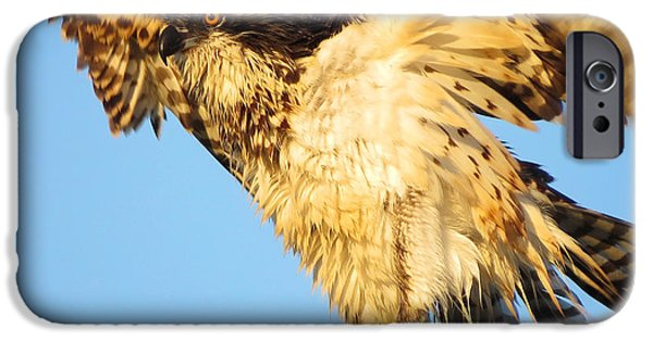 East Dennis Ma iPhone Cases - Osprey in Summer iPhone Case by Dianne Cowen