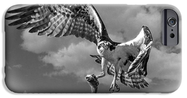 Killer B iPhone Cases - Osprey In The Clouds BLACK AND WHITE D7774 iPhone Case by Wes and Dotty Weber