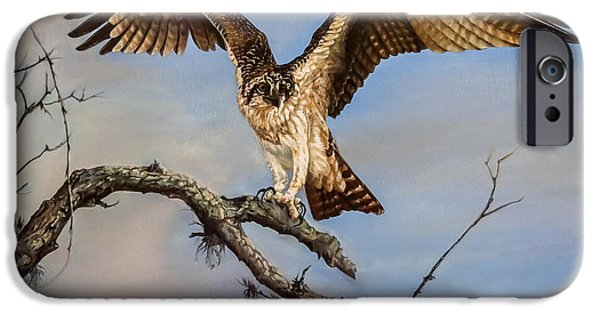 Hawk Art Print iPhone Cases - Osprey on the branch iPhone Case by Zina Stromberg