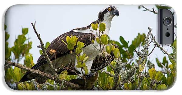 Predator Pyrography iPhone Cases - Osprey perched with a fish iPhone Case by Michael Bennett