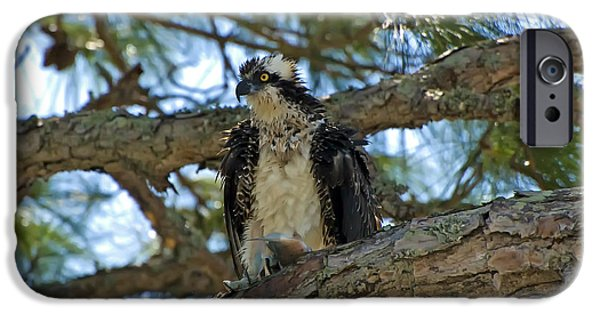 Beauty Mark iPhone Cases - Osprey iPhone Case by Rich Leighton