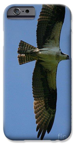 Androscoggin iPhone Cases - Osprey Summer Flight on the Androscoggin  iPhone Case by Neal  Eslinger