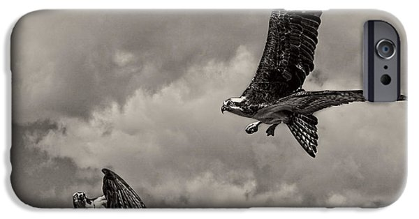 Killer B iPhone Cases - Osprey Surprise Attack D9791 iPhone Case by Wes and Dotty Weber