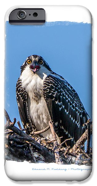 Osprey Surprise Party Card iPhone Case by Edward Fielding