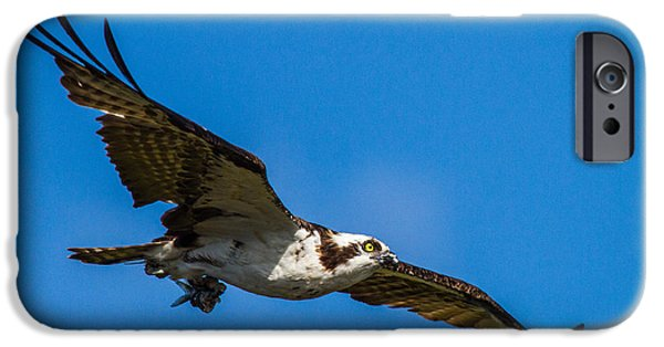 Bird iPhone Cases - Osprey with its little pray iPhone Case by Andres Leon