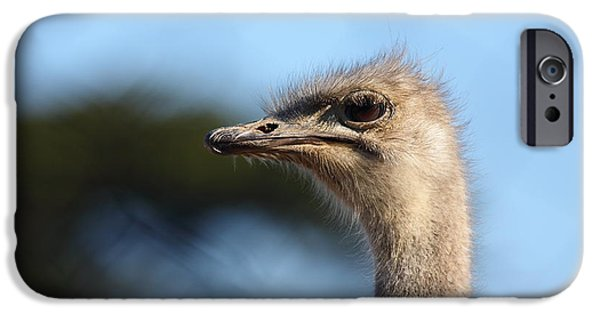 Ostrich iPhone Cases - Ostrich 5D27027 iPhone Case by Wingsdomain Art and Photography