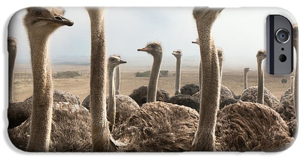 Farm iPhone Cases - Ostrich heads iPhone Case by Johan Swanepoel