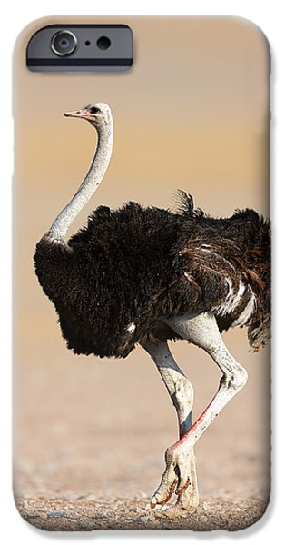 Environment Photographs iPhone Cases - Ostrich iPhone Case by Johan Swanepoel