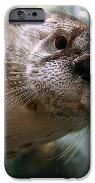 Otter Be Lookin' at You Kid iPhone Case by John Haldane