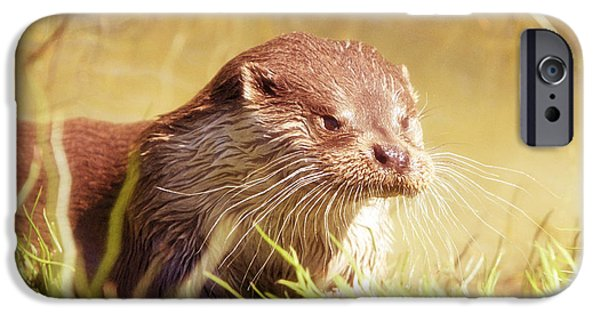 Otter Digital Art iPhone Cases - Otter in the Field iPhone Case by KJ DePace