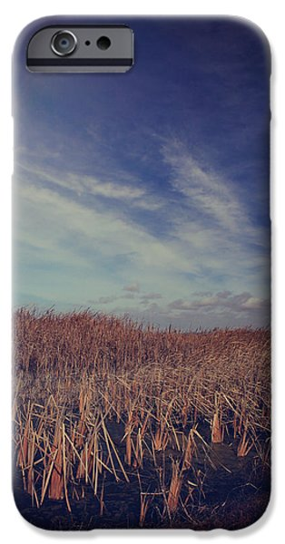 Cattails iPhone Cases - Our Day Will Come iPhone Case by Laurie Search
