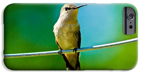 Baby Bird iPhone Cases - Our Lil Hummer iPhone Case by Kristine Patti