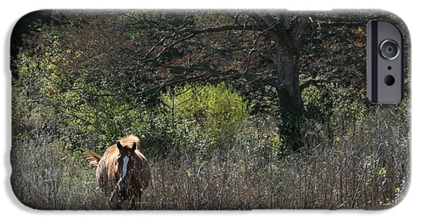 Animals Photographs iPhone Cases - Out for a Strol iPhone Case by Mindy Scott