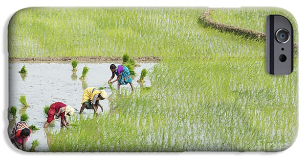Floods Photographs iPhone Cases - Out in the Fields iPhone Case by Tim Gainey