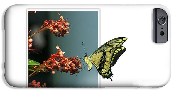 Creative Manipulation iPhone Cases - Out of Frame Butterfly iPhone Case by Ginger Harris