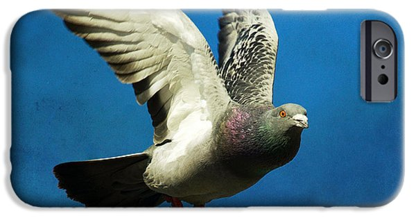 Pigeon iPhone Cases - Out Of The Blue iPhone Case by Fraida Gutovich