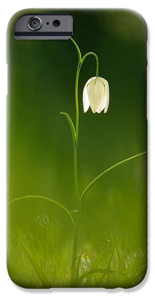 Meleagris iPhone Cases - Out of the Green iPhone Case by Roeselien Raimond