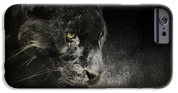 Felidae iPhone Cases - Out of the Shadows - Wildlife - Black Leopard iPhone Case by Jai Johnson