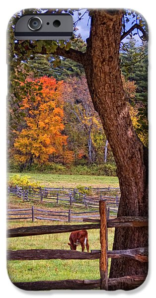 Massachusetts Autumn Scenes iPhone Cases - Out to Pasture iPhone Case by Joann Vitali