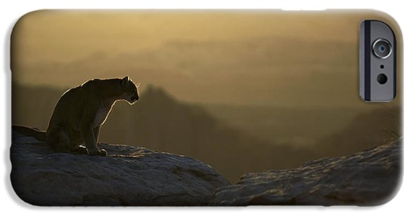 Animals Photographs iPhone Cases - Outlook iPhone Case by Wildlife Fine Art
