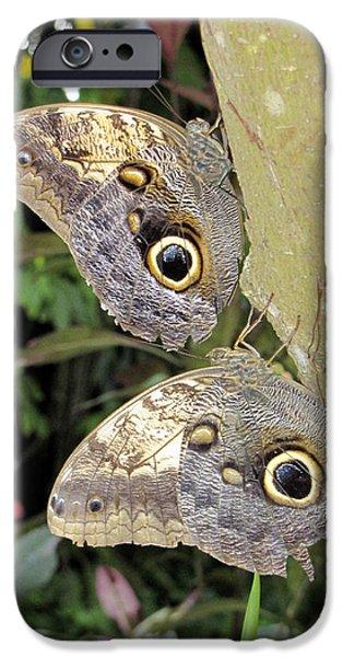 Butterfly Prey iPhone Cases - Owl Butterflies iPhone Case by Bob Slitzan