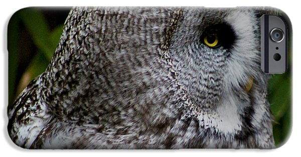 Snowy Owl iPhone Cases - Owl Eye iPhone Case by Martin Newman