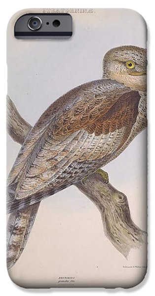 Business Paintings iPhone Cases - Owl Steanorninae iPhone Case by Unknown Artist