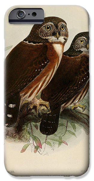 Colored Owls iPhone Cases - Owls iPhone Case by J G Keulemans