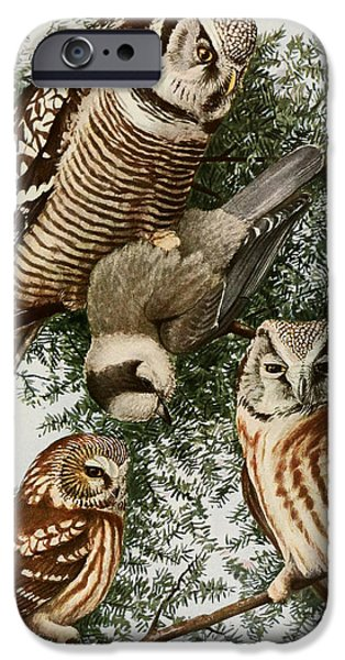 Colored Owls iPhone Cases - Owls iPhone Case by Louis Agassiz Fuertes