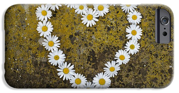 Lichens iPhone Cases - Oxeye Daisy Heart iPhone Case by Tim Gainey