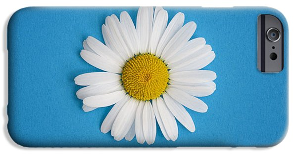 Midsummer iPhone Cases - Oxeye Daisy Square Blue iPhone Case by Tim Gainey