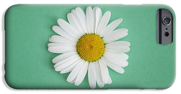 White Daisies iPhone Cases - Oxeye Daisy Square Green iPhone Case by Tim Gainey
