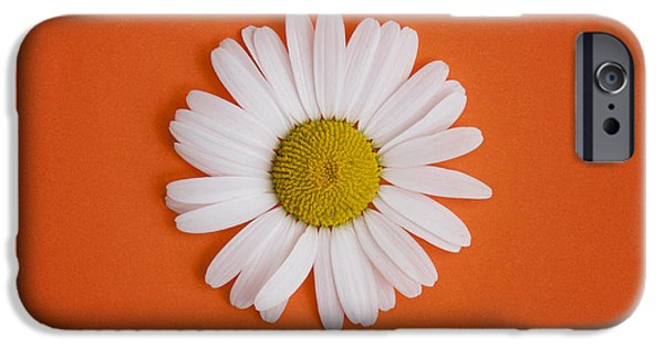 White Daisies iPhone Cases - Oxeye Daisy Square Orange iPhone Case by Tim Gainey