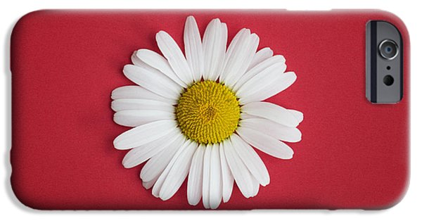 White Daisies iPhone Cases - Oxeye Daisy Square Red iPhone Case by Tim Gainey