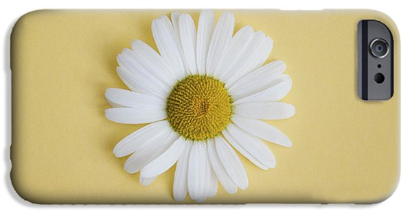 White Daisies iPhone Cases - Oxeye Daisy Square Yellow iPhone Case by Tim Gainey