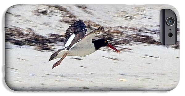 Chatham iPhone Cases - Oystercatcher 1 iPhone Case by Constantine Gregory