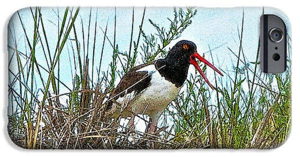 Chatham iPhone Cases - Oystercatcher 2 iPhone Case by Constantine Gregory