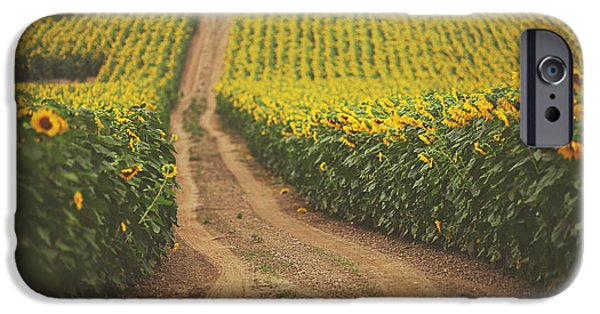 Sunflowers iPhone Cases - Oz iPhone Case by Carrie Ann Grippo-Pike