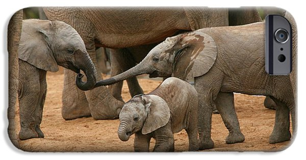 Elephants Photographs iPhone Cases - Pachyderm Pals iPhone Case by Bruce J Robinson