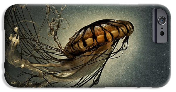 Tentacles iPhone Cases - Pacific Sea Nettle iPhone Case by Marianna Mills