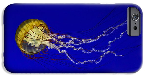 Tentacles iPhone Cases - Pacific Sea Nettle iPhone Case by Mark Kiver