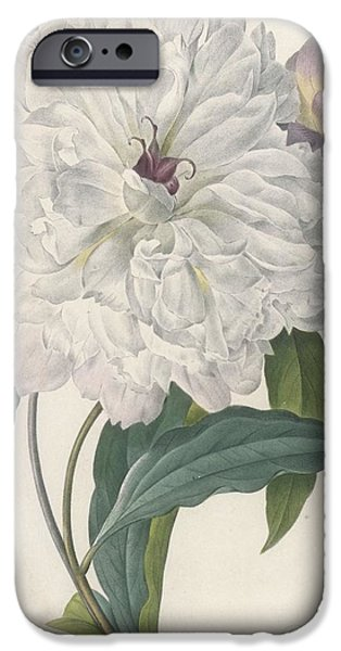 Flora Drawings iPhone Cases - Paeonia Flagrans Peony iPhone Case by Pierre Joseph Redoute